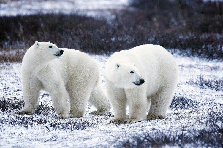 Breaking the ice at European Polar Science Week