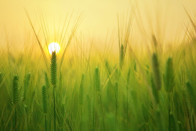 Optimising agriculture