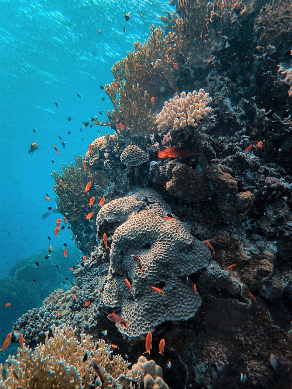 Ocean acidification weakens coral reef skeletons