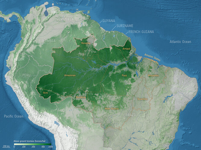 Above ground biomass in the Amazon basin